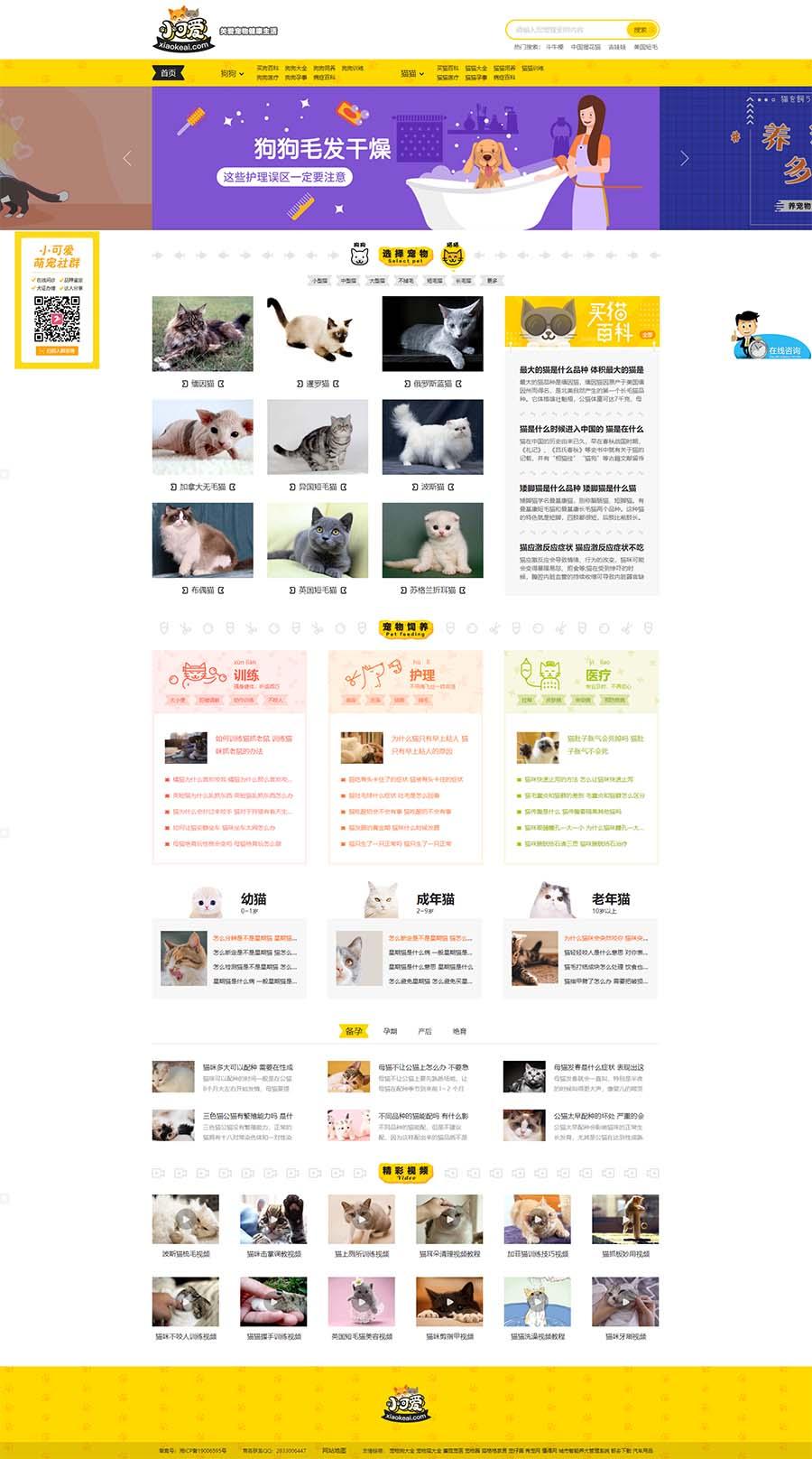 帝国cms仿小可爱宠物网完整源码,专业宠物资讯平台源码下载 -图1